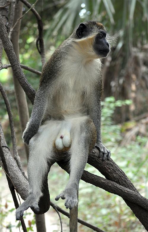 ANIMALES EN GAMBIA. GAMBIA_ANA_CANIZAL_0018